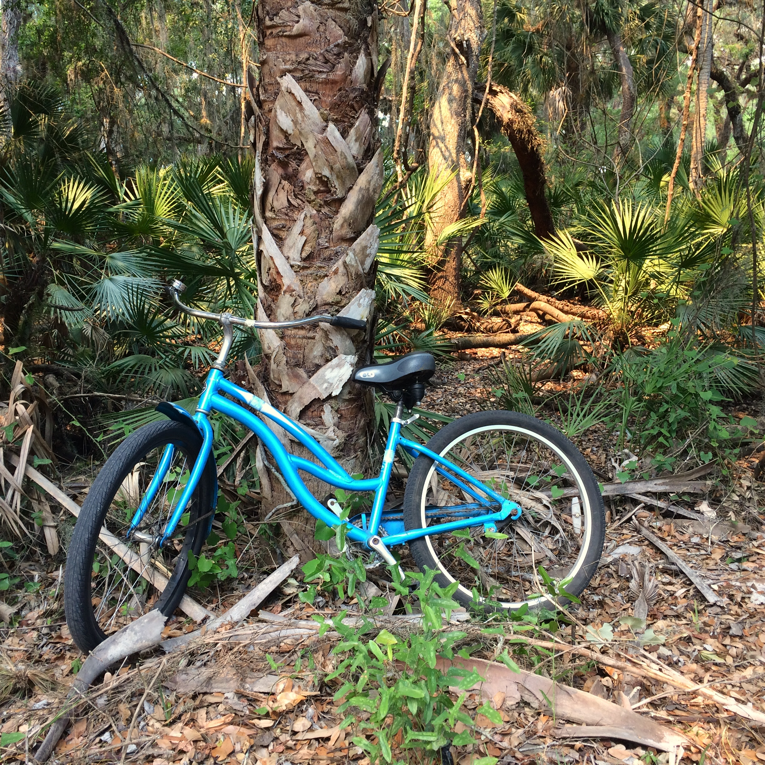 Stopping along the road in Myakka River State Park.