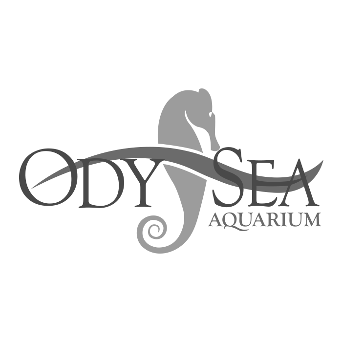 Odysea.png
