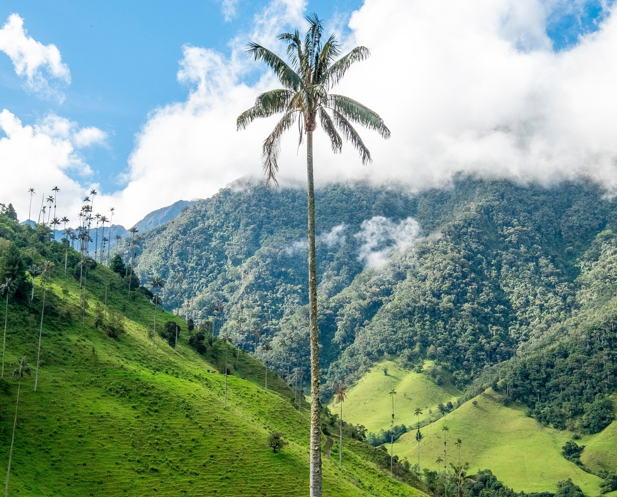 COLOMBIA - COAST | Culture | MOUNTAINS | WILDLIFE