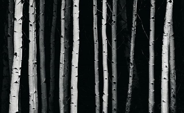 """Washington Aspen Mini-Series  Image 2:  SCRATCHED BARCODE  675mm, f/9, 1/50"""" (tripod), ISO 100  Scan here. Salicyn extracted from the Aspen's hauntingly beautiful white bark is used as a natural alternative to aspirin and is also found in many cosmetic products.  Trees give us so much.  #aspentrees  #abstractnature #abstractlandscape #autumn  #fall  #earth_deluxe  #washingtonexplored  #wenatchee  #landscapephotography #blackandwhite"""