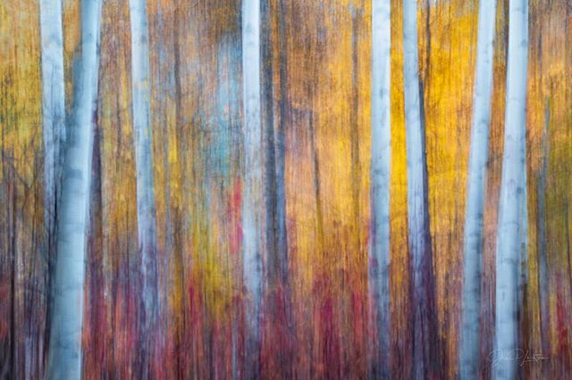 """Washington Aspen Mini-Series  Image 4: Impressions of Autumn 102mm, f/11, 1.6"""", ISO 64  """"It's not what you look at that matters, it's what you see."""" — Henry David Thoreau  Using intentional camera movement, you can create something very different than descriptive, documentary images. The movement creates a sense of energy. Details are stripped away leaving an impressionistic wash of colors with only the implication of basic shapes.   #Wenatchee #Leavenworth #earth_deluxe #landscapephotography #fineart #washingtonexplored #pnw"""