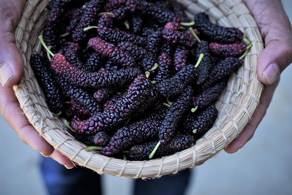 mulberries.froghollowfarm.jpg