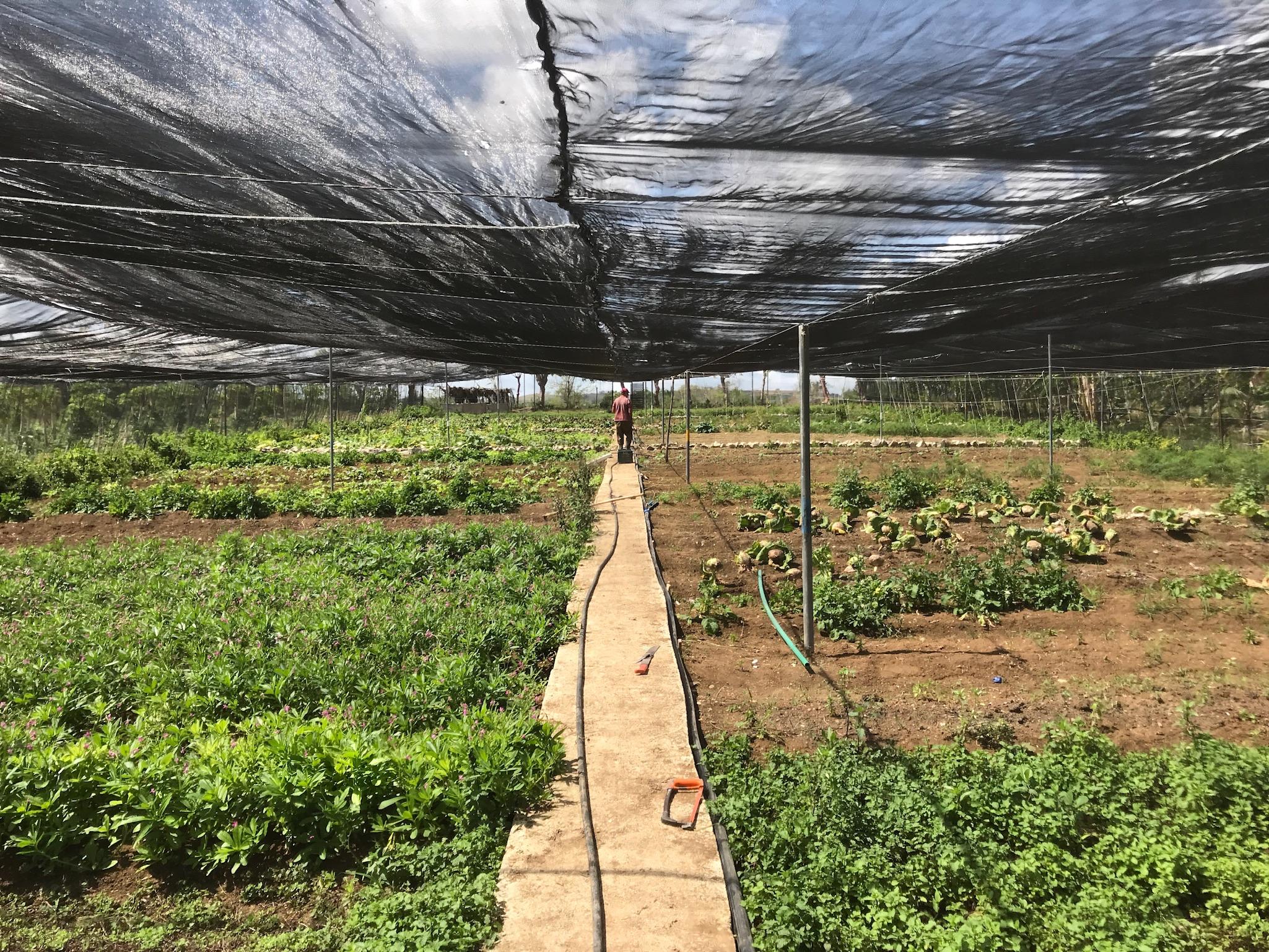 cuba.farm.JPG