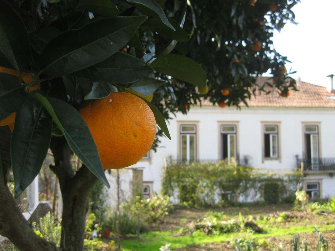 10_house_from_garden.jpg