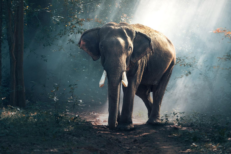 1500x1000-ast-elephant.jpg