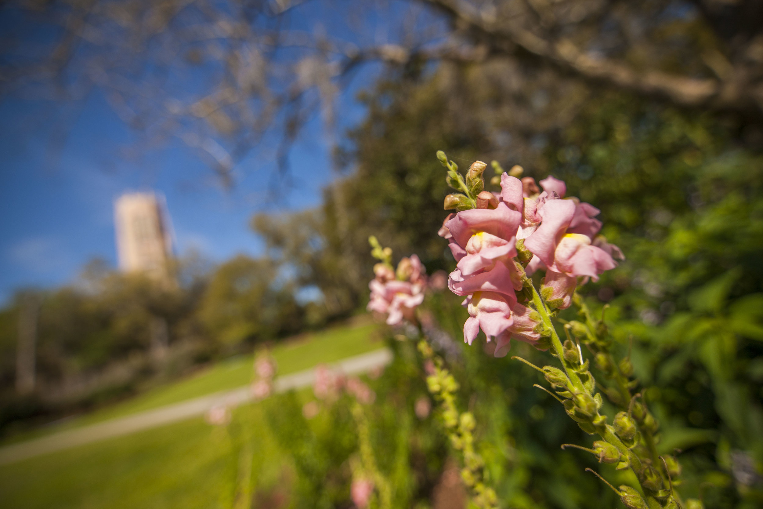 blooms-at-bok-tower-gardens_28172397350_o.jpg