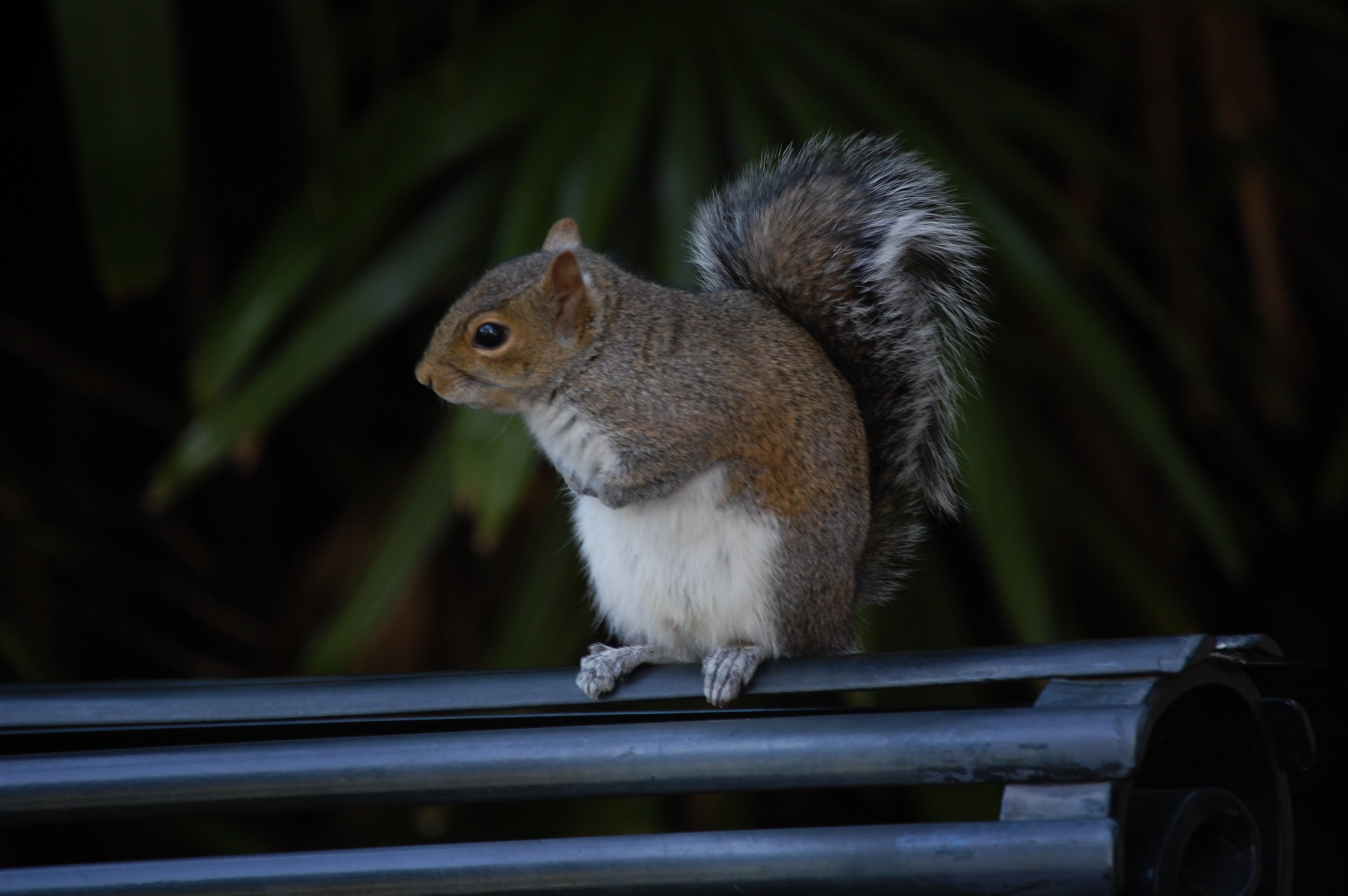 Inquisitive Squirrel.jpg