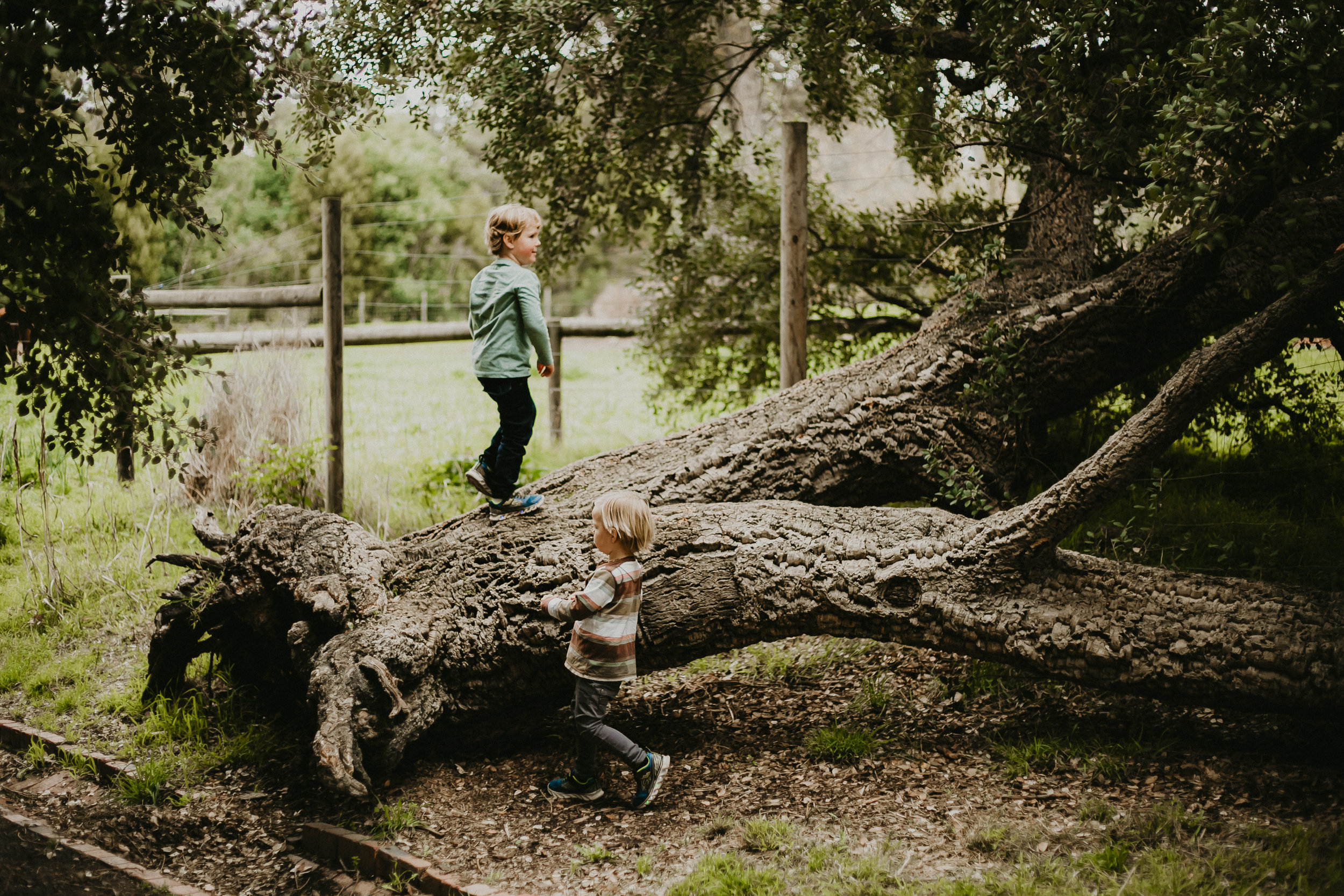 Teodora Tinc Family Children Photography Melbourne 0003.jpg