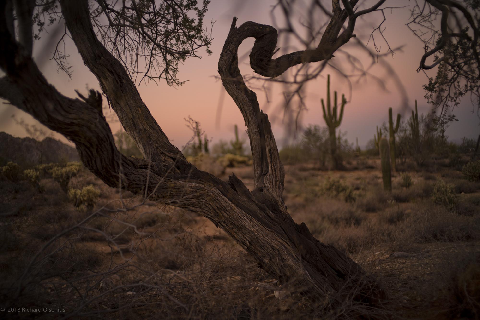 Desert_20