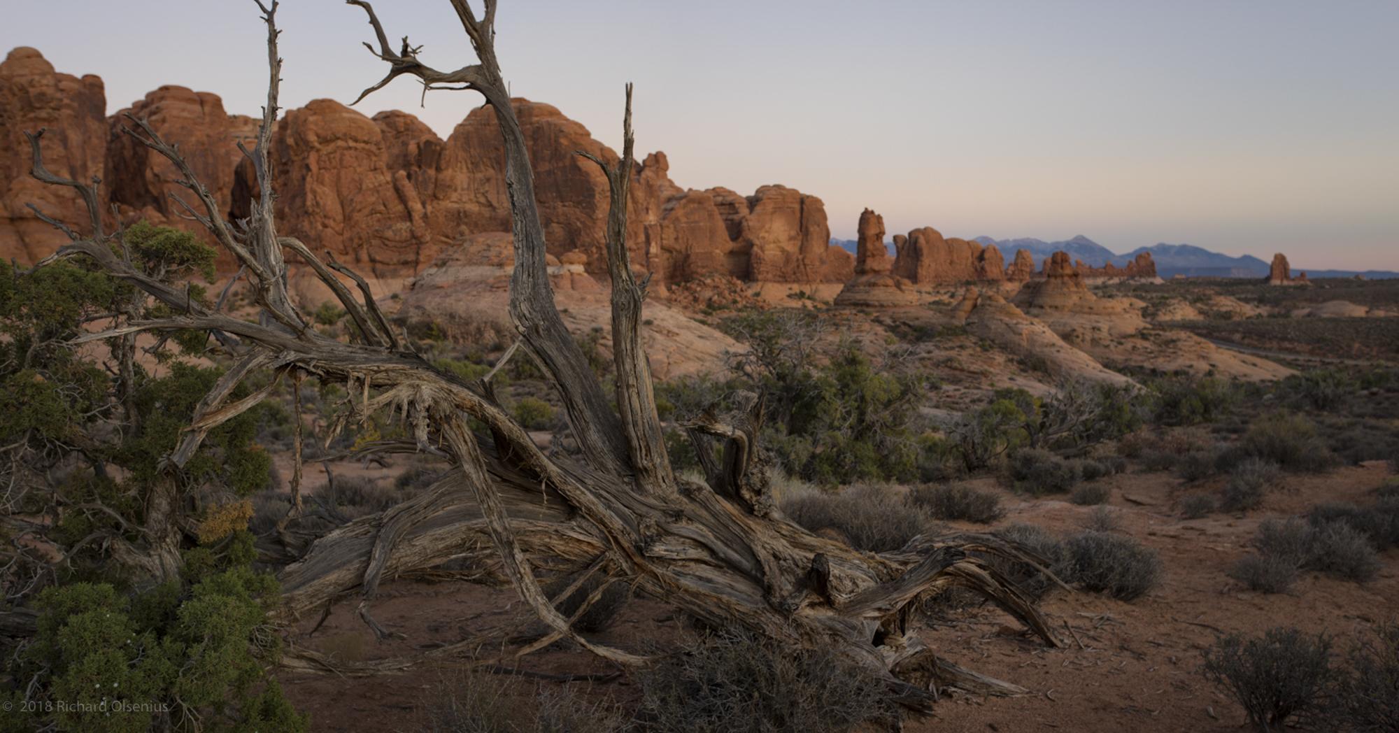 Desert_26
