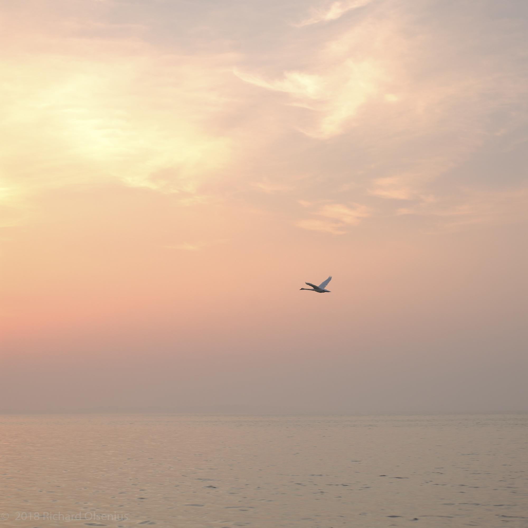 Bay Landscapes-5