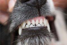 3. Teeth   Clean, shiny and unbroken.