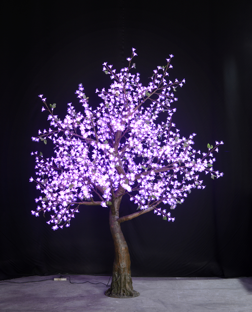 Purple Flatiron Cherry Tree