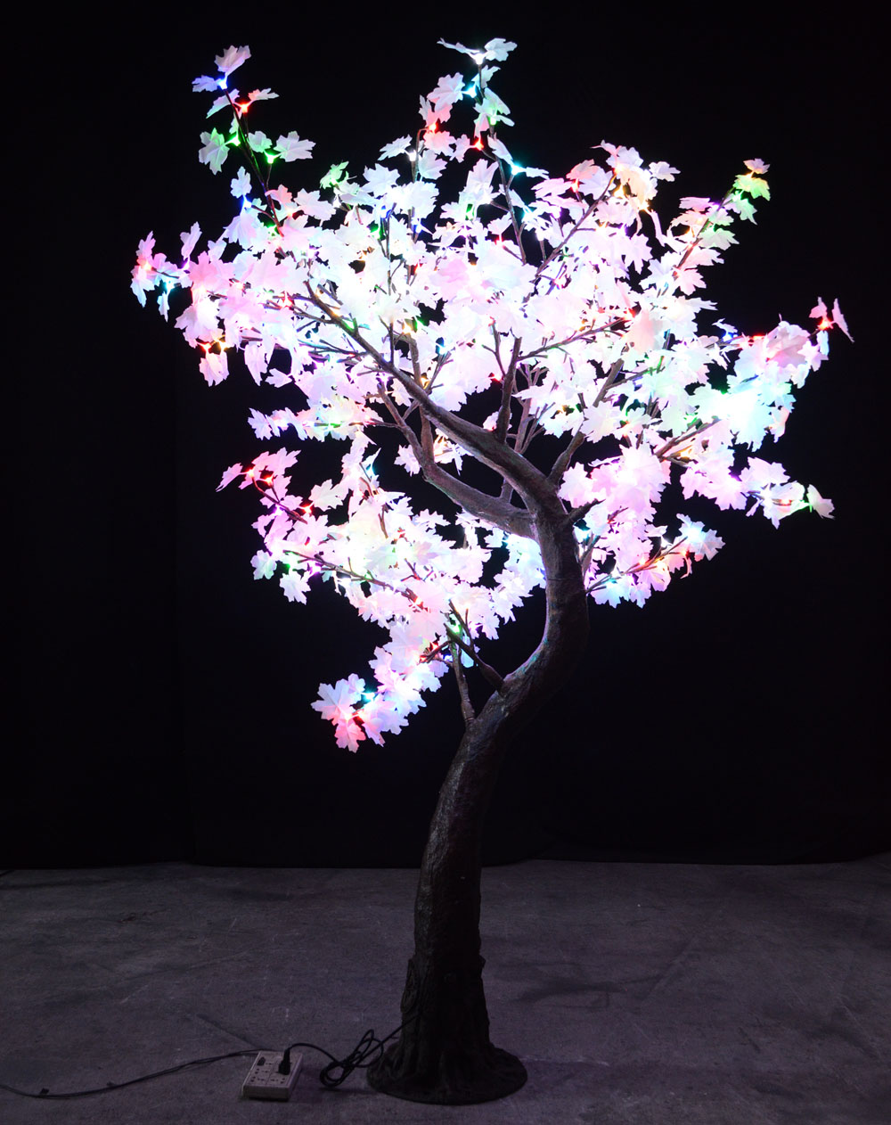 Multi Color Maple Crestone Tree