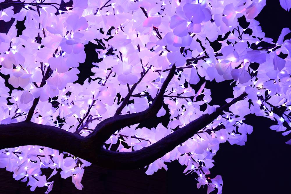 Loved By Event Planners And Guests Alike,The Remote Controlled Color Changing Gingko Tree Catches An Incredible Display For The Eyes. The Full White Leaves, A Remote Control To Change Colors On Demand Coupled With A Natural Trunk Will Have People In Awe.