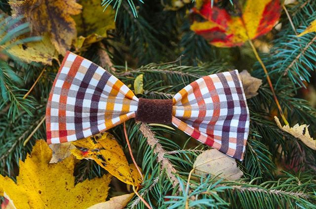 I can't believe that Thanksgiving is already almost here! I think the Ginger Hound Bow Tie is the perfect look for every thanksgiving dinner! What Thanksgiving traditions does your family have? My family eats seafood and goes to the movies! #perseveringpack #dogbowtie #dogaccessories #dogmodel #dogmom #thanksgivingdinner #thanksgiving #dogsandpals #weekyfluff #velcrodog #dailybarker #vizsla #gingerdog #dogsofmichigan #dogsofthemitten #thankful