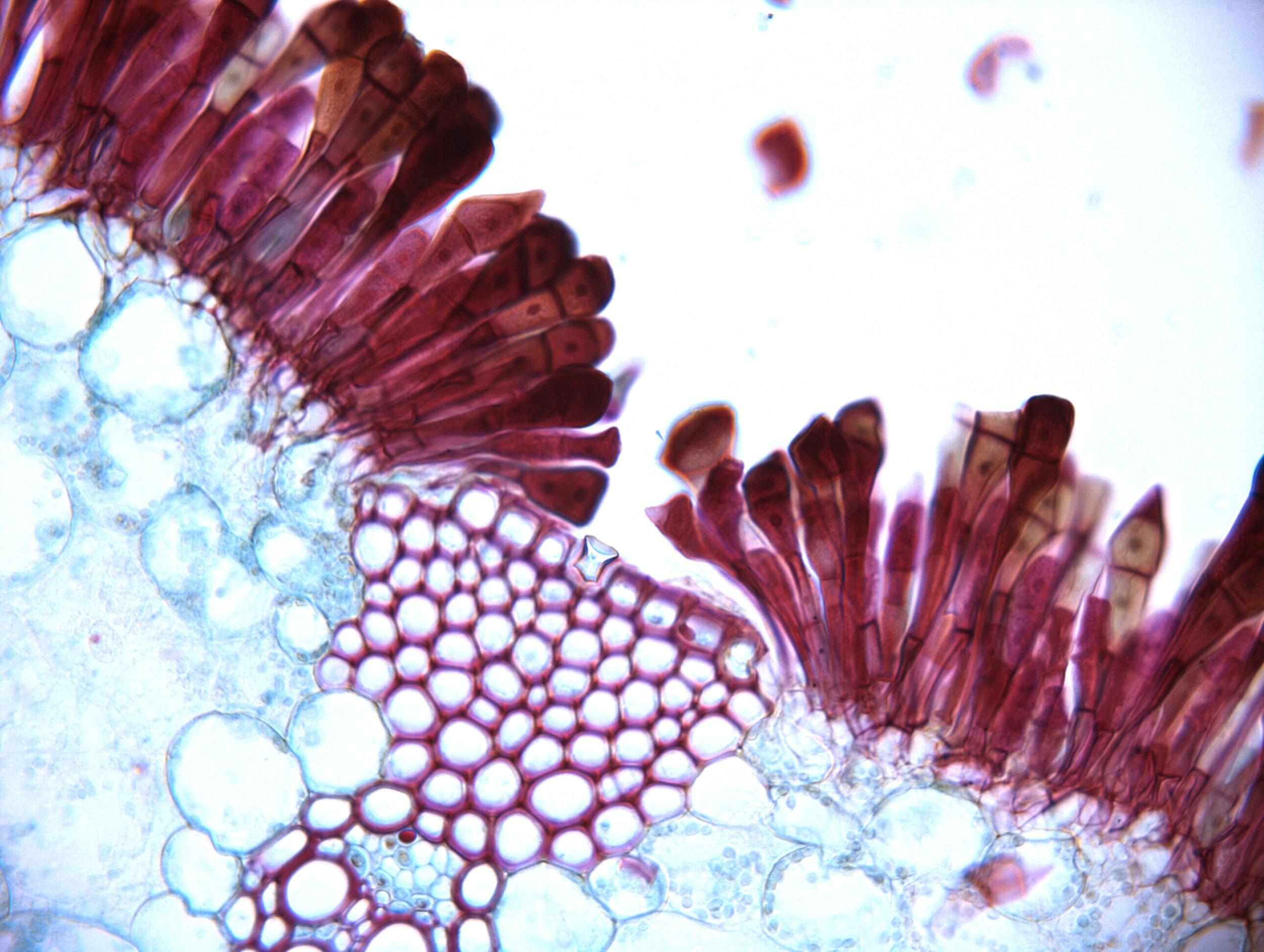 microscope img_01.jpg
