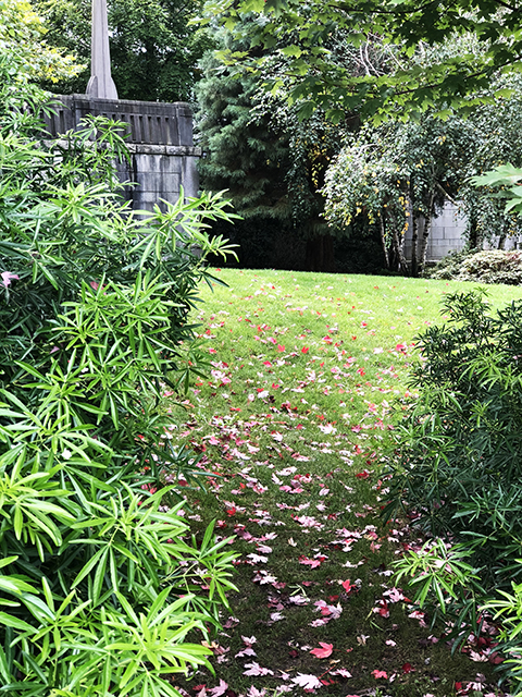 Potential Secret Garden?