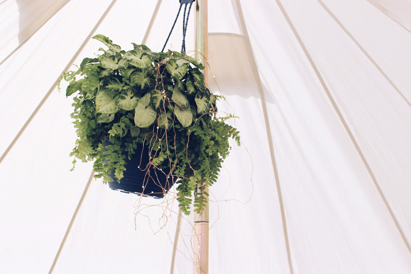 the_Collection_co_grazing_table_cairns_weddings_catering_grazing_platter_hire_pop_up_picnic_bell_tent_event_hire_styling-12-2.jpg