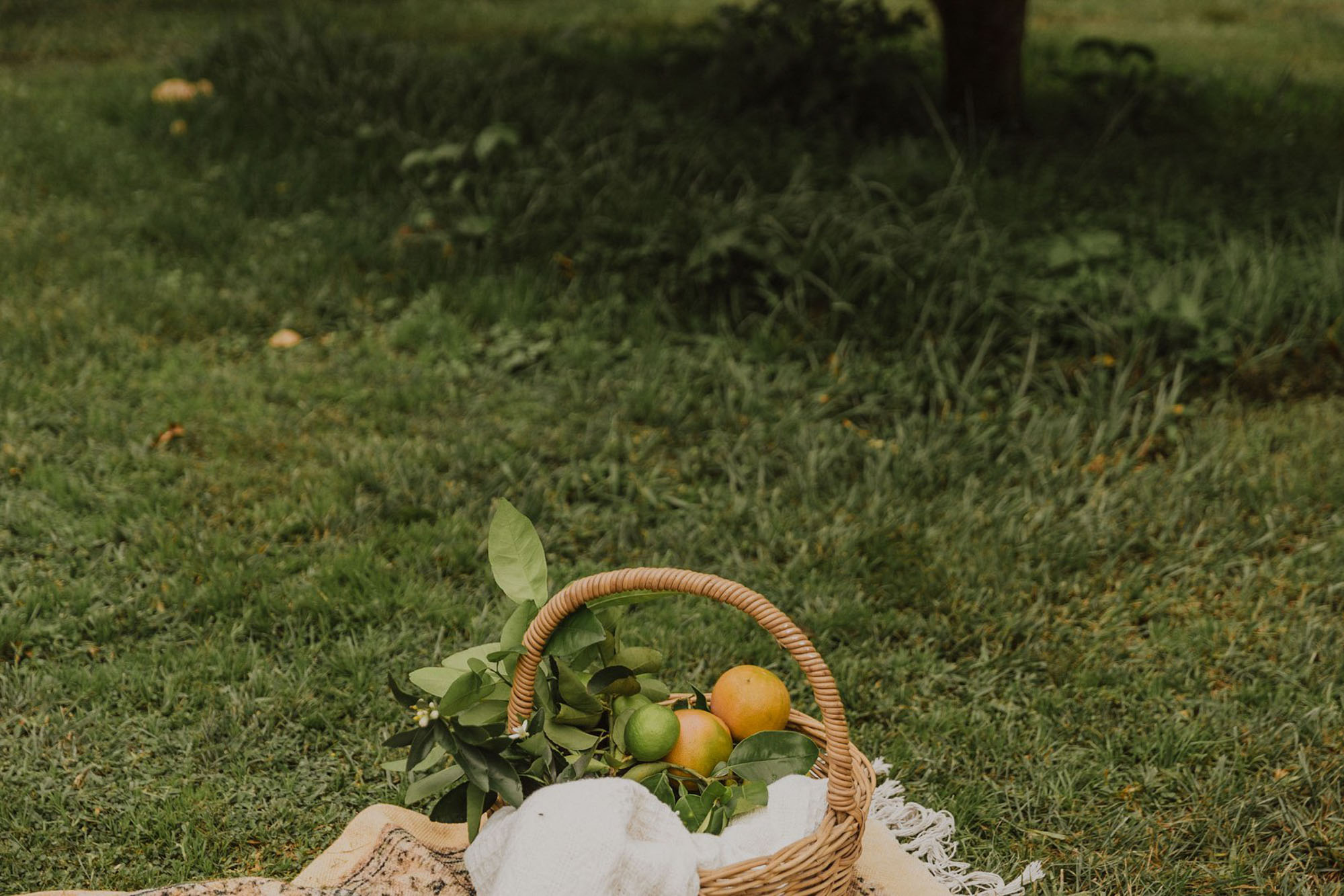 Styled Photshoot - Orchard Picnic Cairns  - Event Styling and Catering by The Collection Co-8.jpg