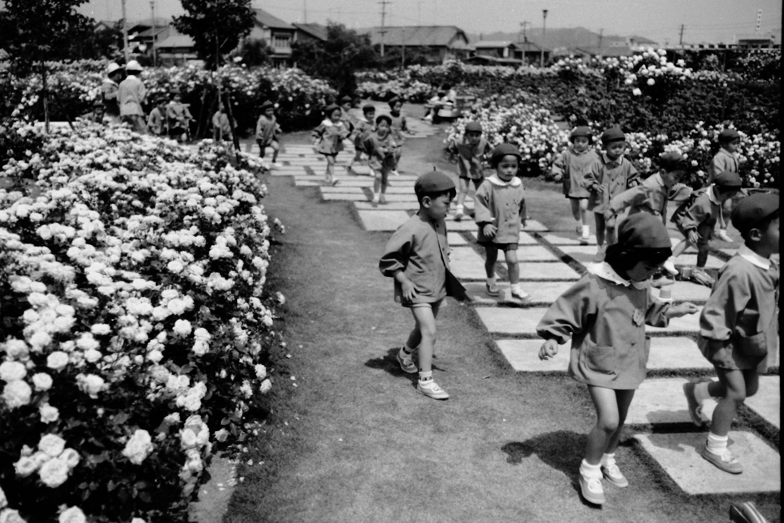The first rose festival held on May 17, 1968