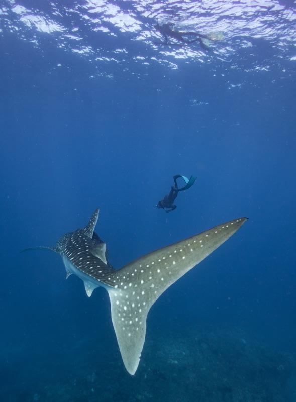 Freediving-7.jpg