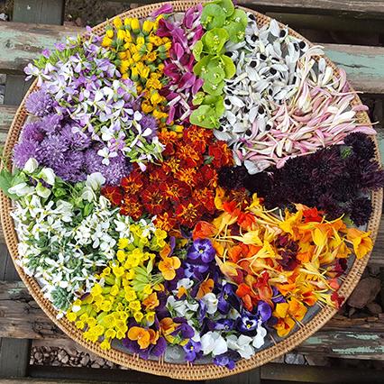 Edible-flowers.jpg