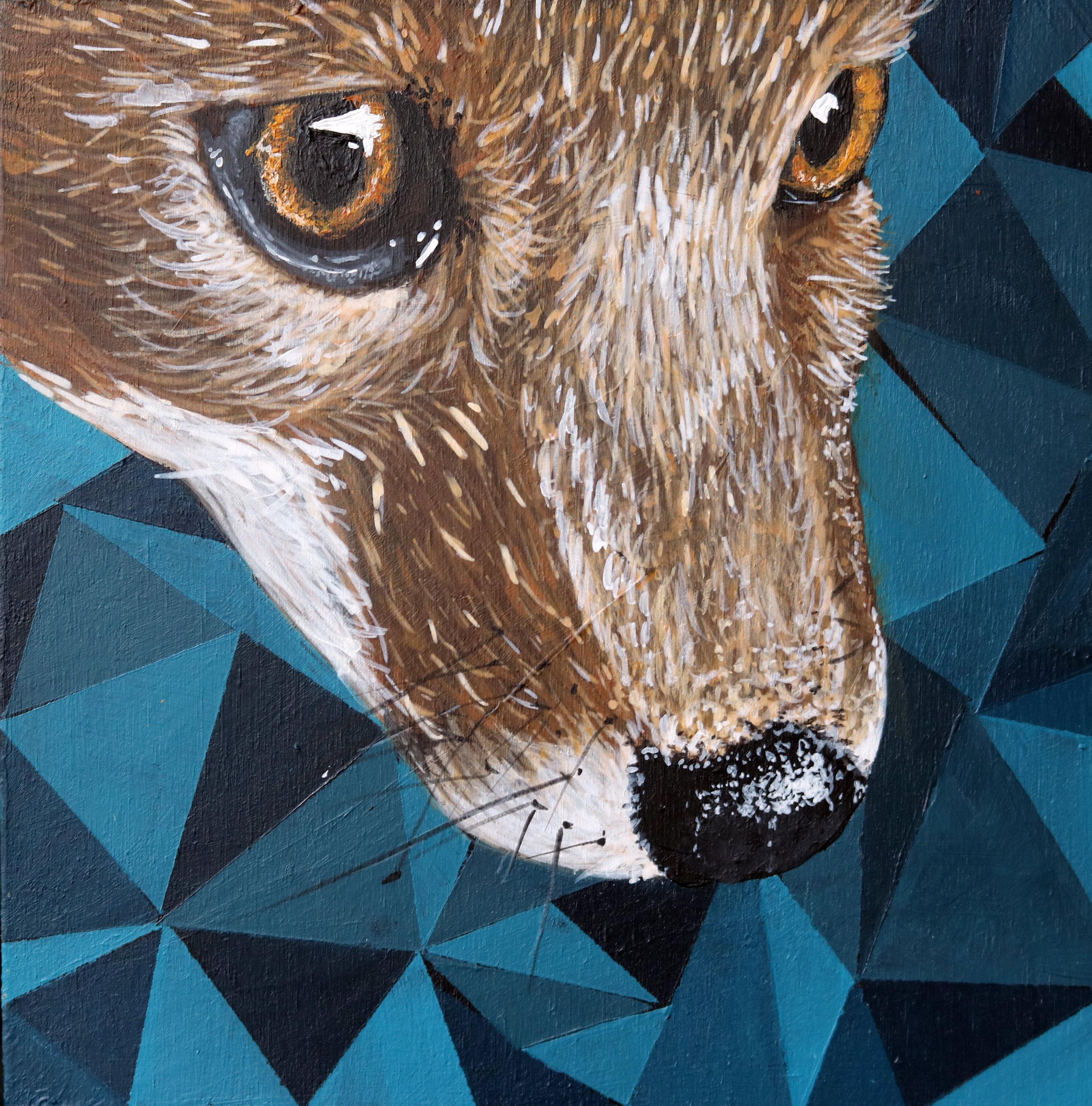 fox6x6.jpg