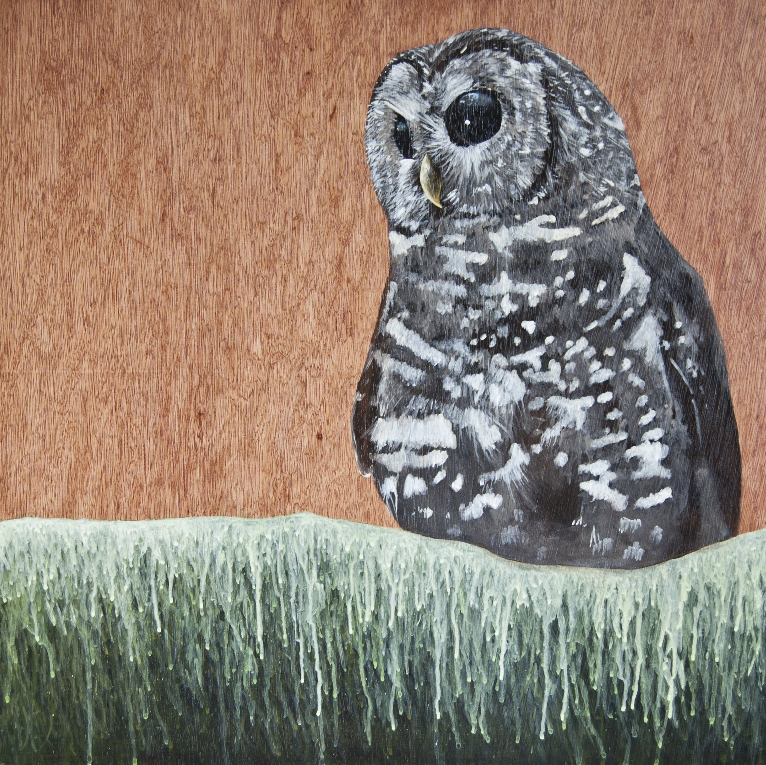 Spotted Owl - Absence.jpg