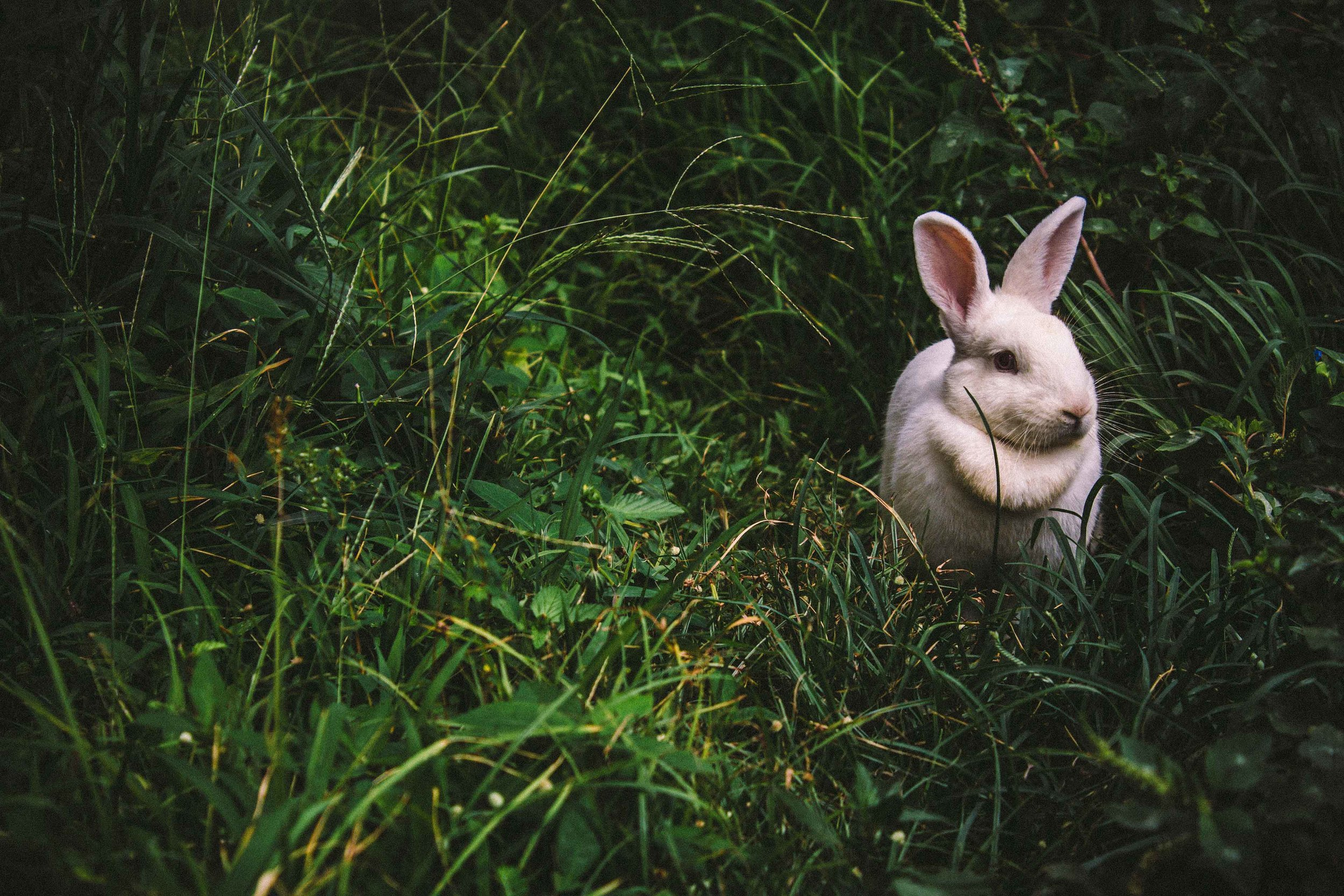 Les-Naly-PETA-Beauty-without-Bunnies-cruelty-free.jpg