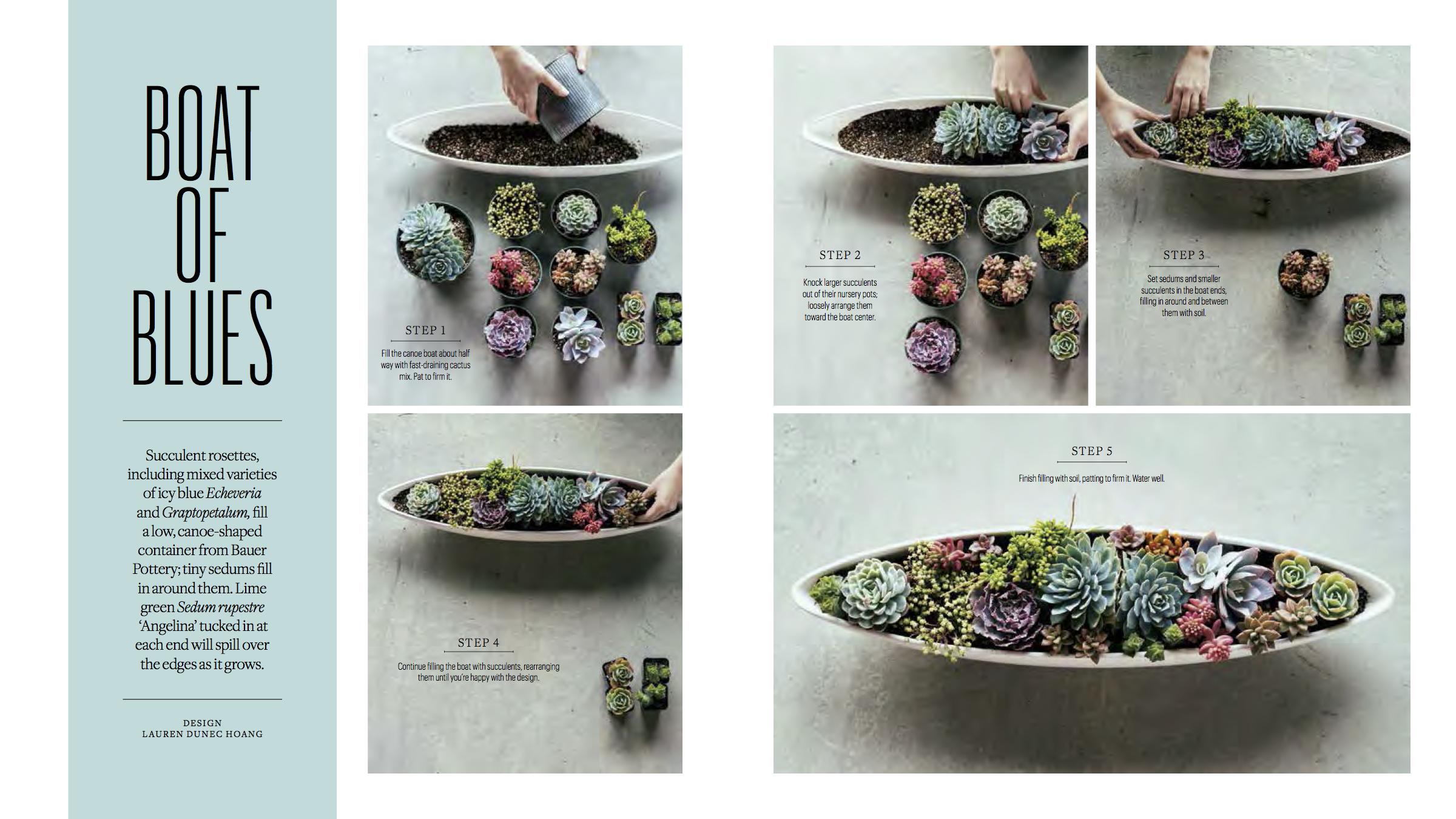 BLAD-Succulents 3.png