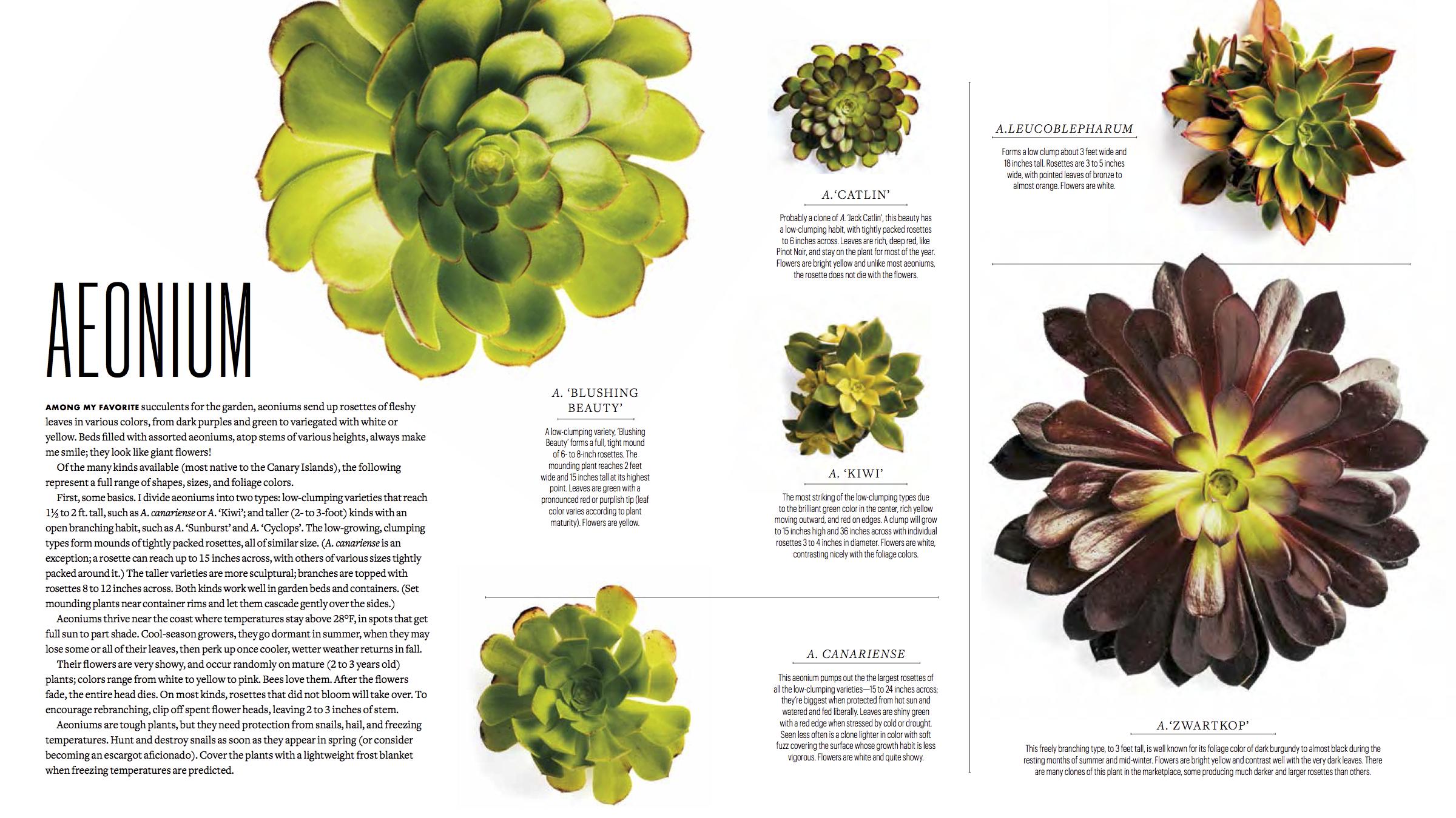 BLAD-Succulents 4.png