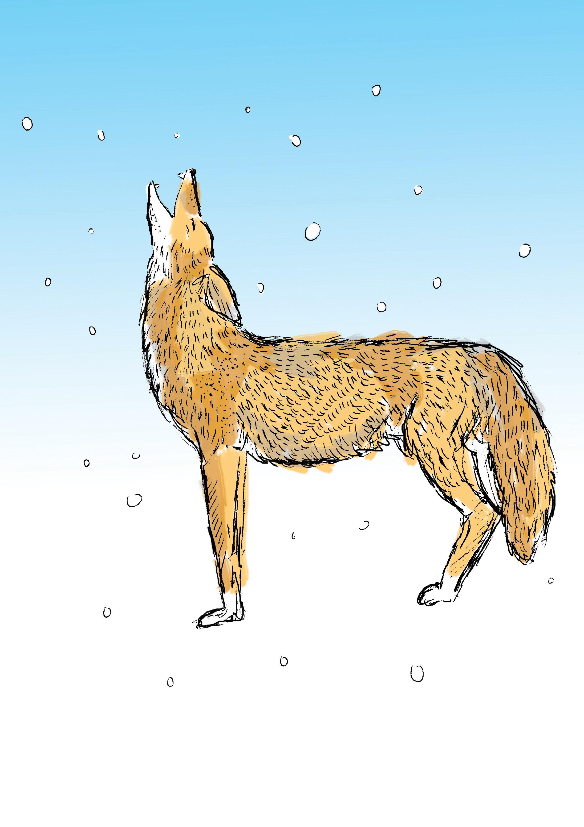 01 Coyote.jpg