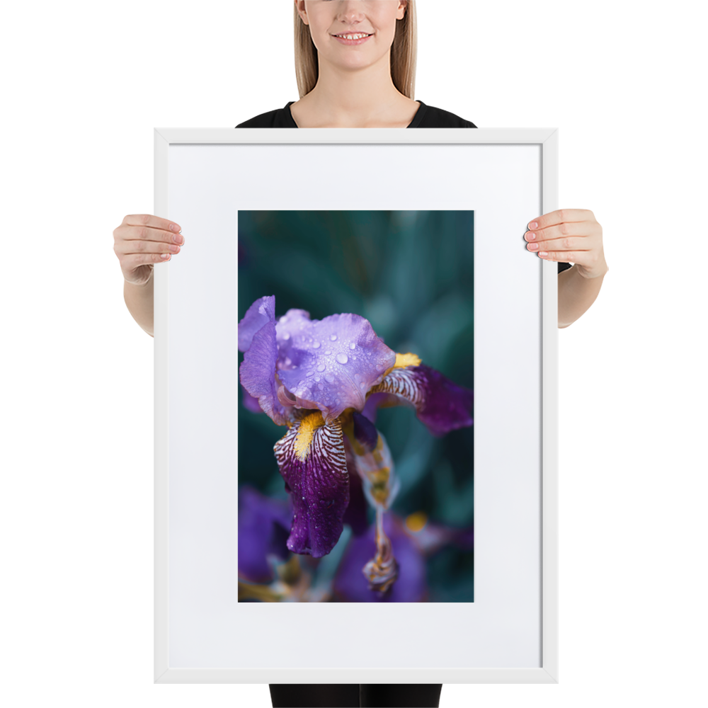 A Print Worth Having - A flower worth showing off