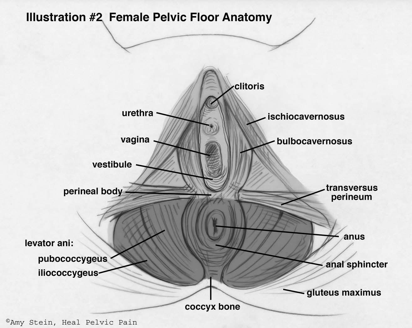 female-pfd-large.jpg