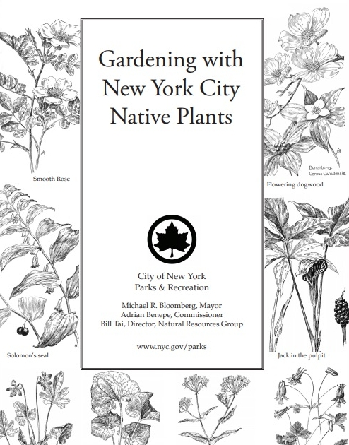 """""""Gardening with New York City Native Plants""""  provides information on why and how to start a native plant garden in the Big Apple. Here you'll find information on what makes a plant native, introduced, or invasive; reasons for going native in your garden, and suggestions for sunny window boxes, potted shade gardens, groundcover, attracting butterflies and birds and showy trees and shrubs. All species listed are native to New York and hardy to zone 5.   Click through for pdf publication."""