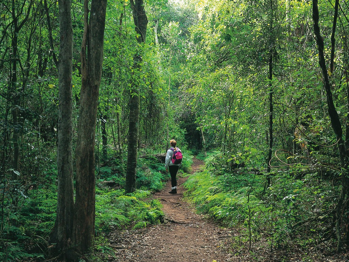 Our Story - INSPIRED ...by the natural beauty of the Queensland Bush.CONCERNED ...that many international tourists don't get to discover these special experiences and placesDETERMINED ...to provide them with an enjoyable journey into memorable locations