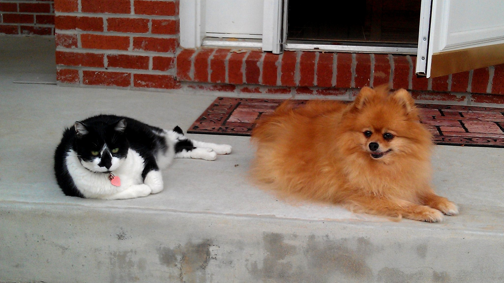 Fluffey-Nicey-Dog-Cat-The-Law-Offices-of-Suraj-A-Vyas-SAVLawfirm-SAV-Law-Firm-Dog-Bite-Animal-Attack.jpg