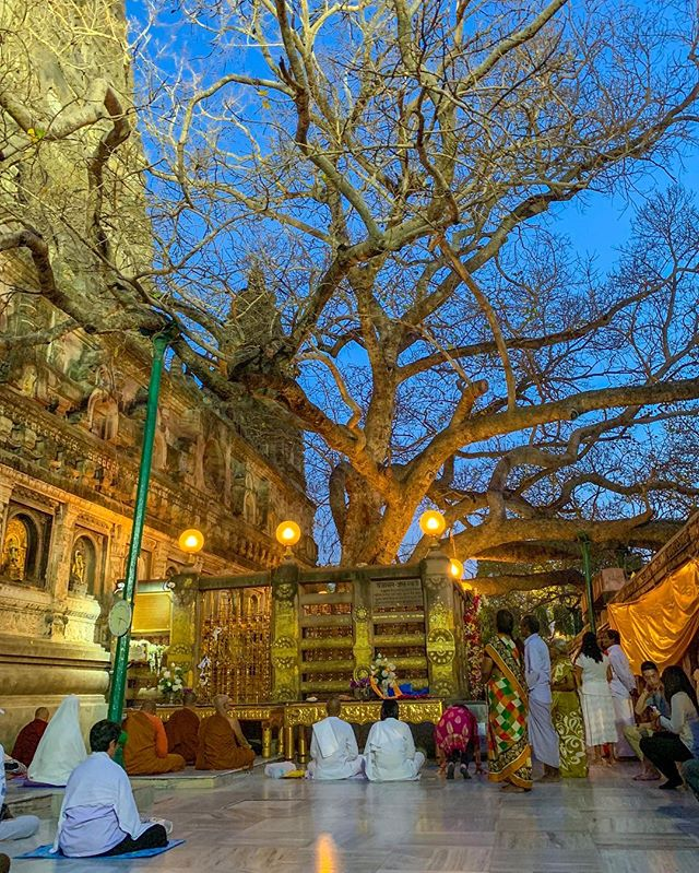 Evenings under the Bodhi Tree. . Bodh Gaya —you were Magical. ✨ I will be back. . . . . #peace #joy #love #gratitude #buddha #buddhalove #enlightenment #buddhism #buddhist #pilgrimage #sangha #dhamma #dharma #meditate #mindfulness #mindfulnessteacher #bodhgaya #bodhgayaindia #bihar #tree #bodhitree #mahabodhitemple #vegan #veganswhotravel #vegansofinstagram #india #indialove #travelindia #thisisindia #incredibleindia🇮🇳