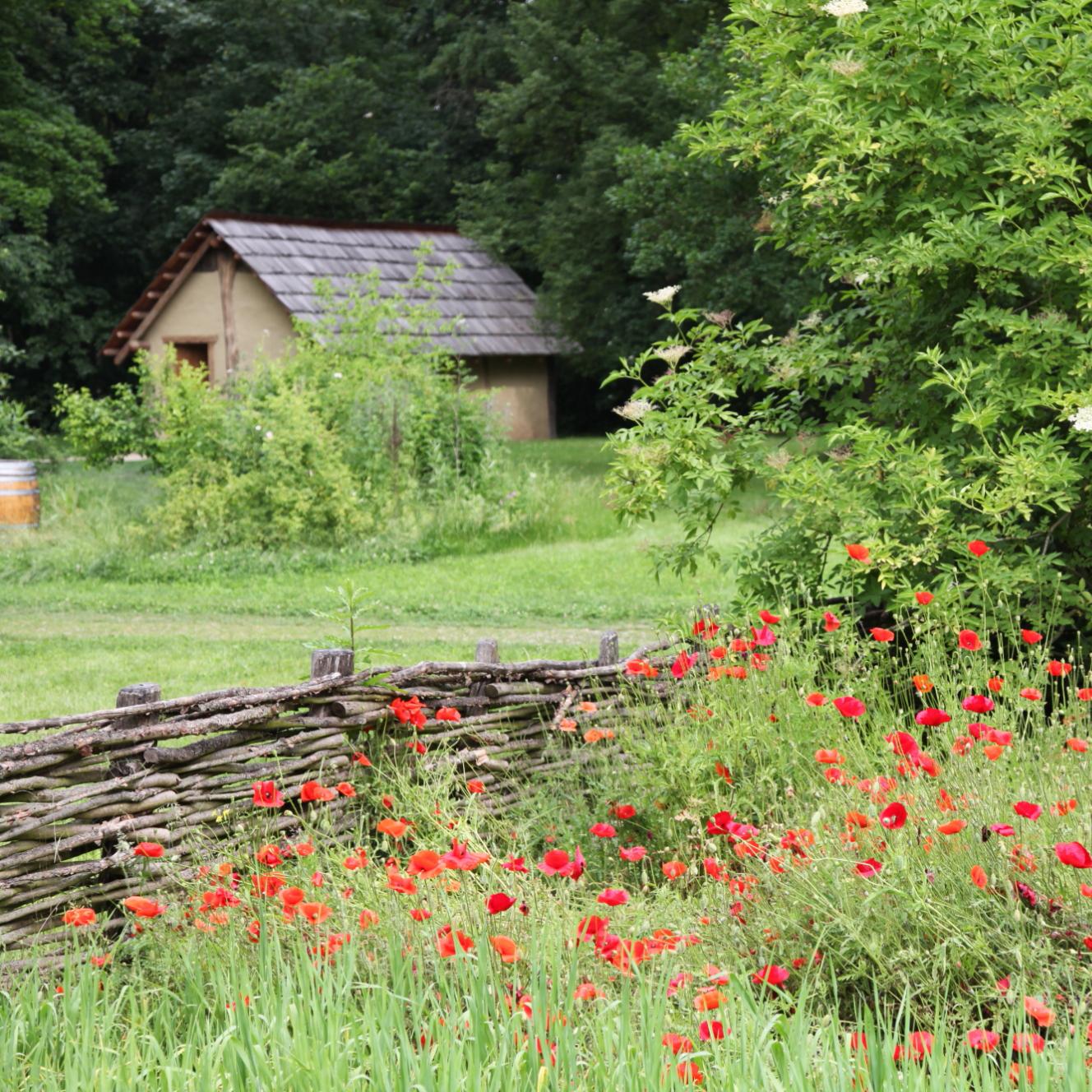 An Asparn Cabin