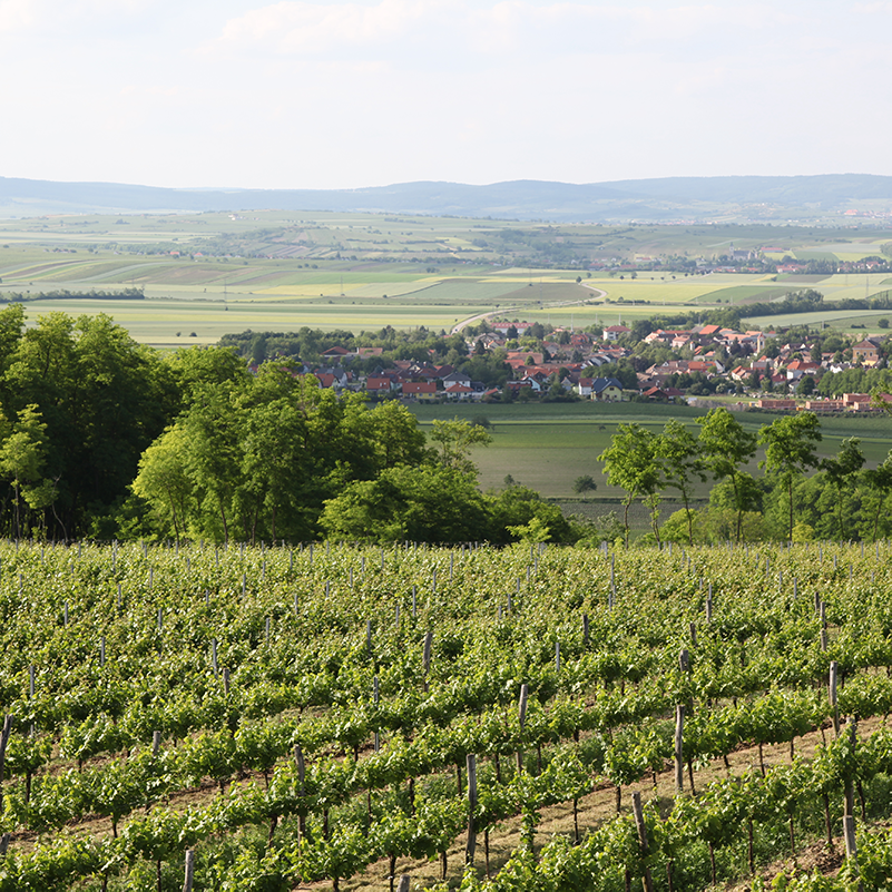 Sandberg area vineyards