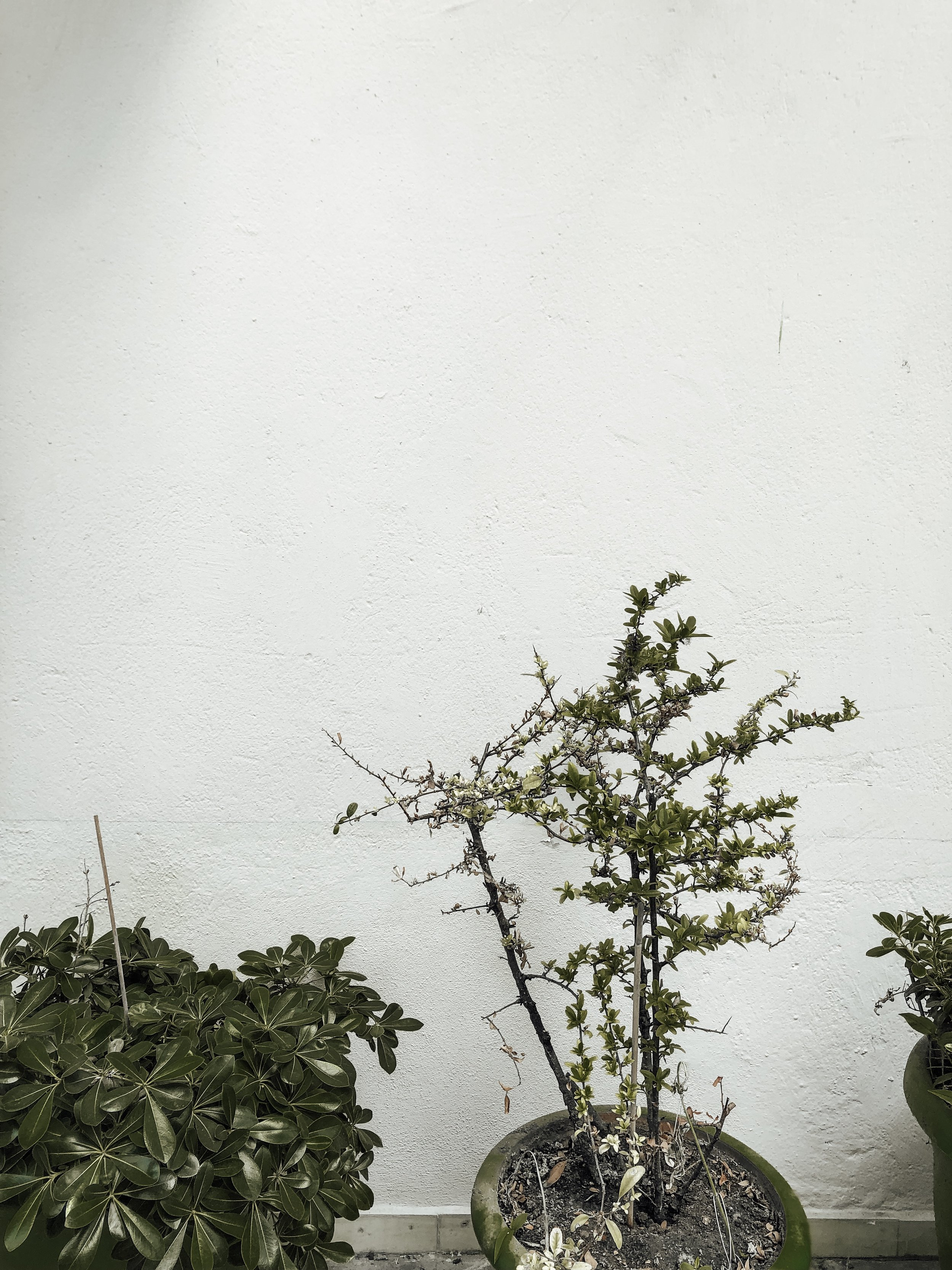 greece-white-plant-wall.JPG