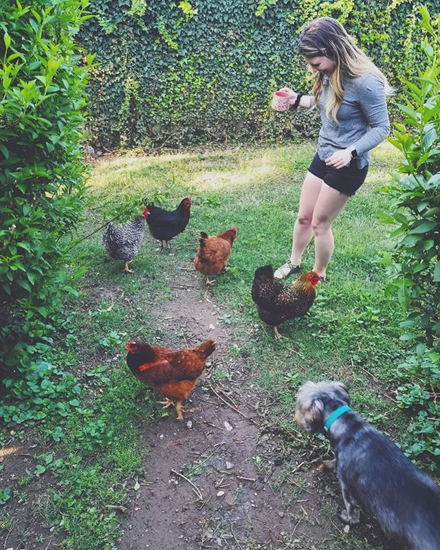 ✨just a gal & her flock✨ . i'm caring for these chickens temporarily but will soon have my own. we're still unpacking & getting settled, but I have a lush, green yard & many windows & lots of space for plants. things feel good.