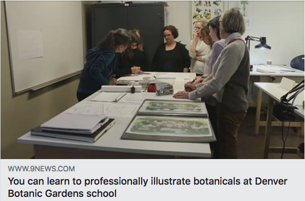 9 News Denver reported on the Denver Botanic Gardens School of Botanical Art & Illustration. Here I am teaching a demo on shading in the classroom. For a link to the article, clicker her: http://www.9news.com/article/life/you-can-learn-to-professionally-illustrate-botanicals-at-denver-botanic-gardens-school/427350574