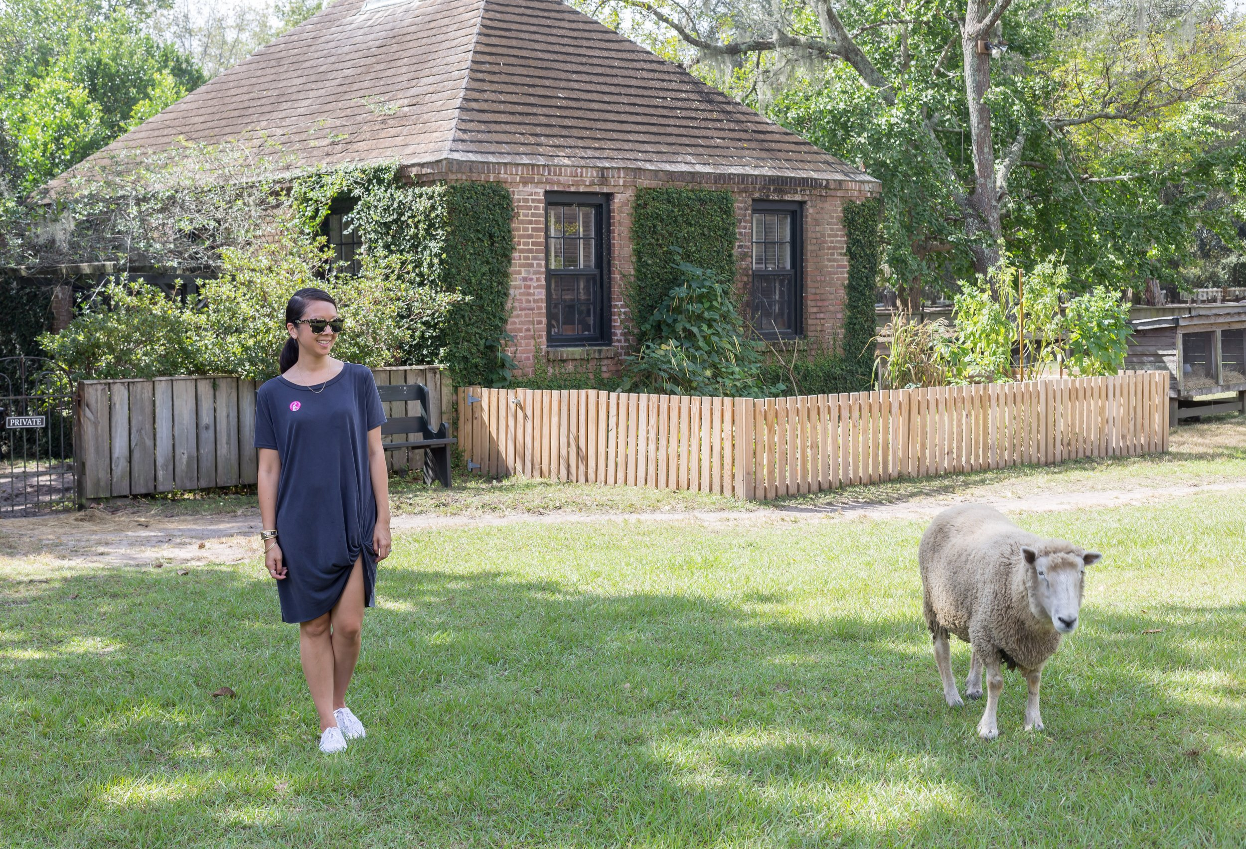 After visiting Magnolia Plantation & Gardens, we took a drive over to  Middleton Place , a national historic landmark. It boasts different types of flowers so that there's always something in bloom no matter what time of year you visit. And you get to hang with some sheep - what more can you ask for?