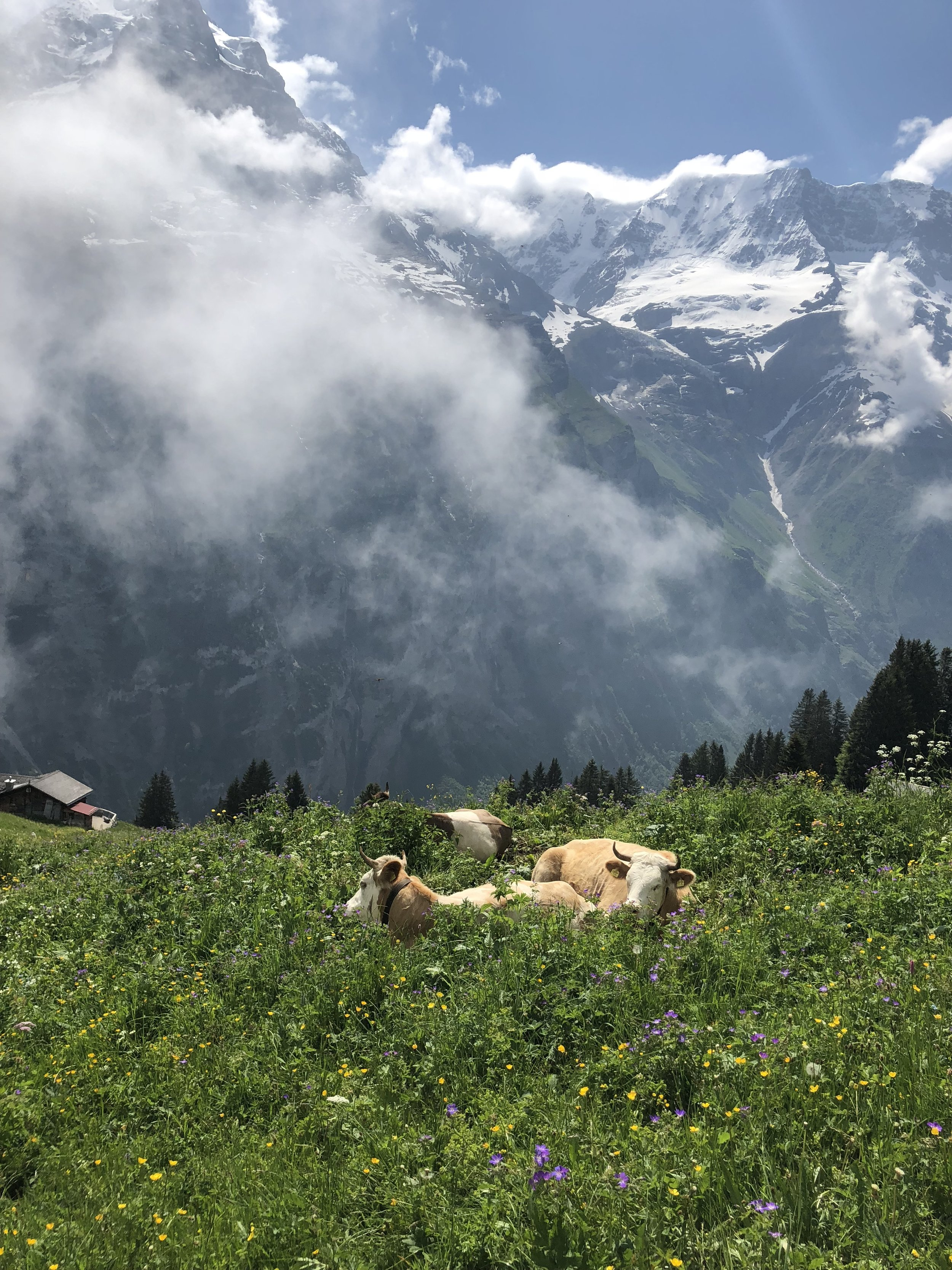 During our walk, we'd come across a number of cows resting and grazing. They were not bothered by us at all. Honestly, though, can you believe this view?? I was obsessed with the beautiful wildflowers.