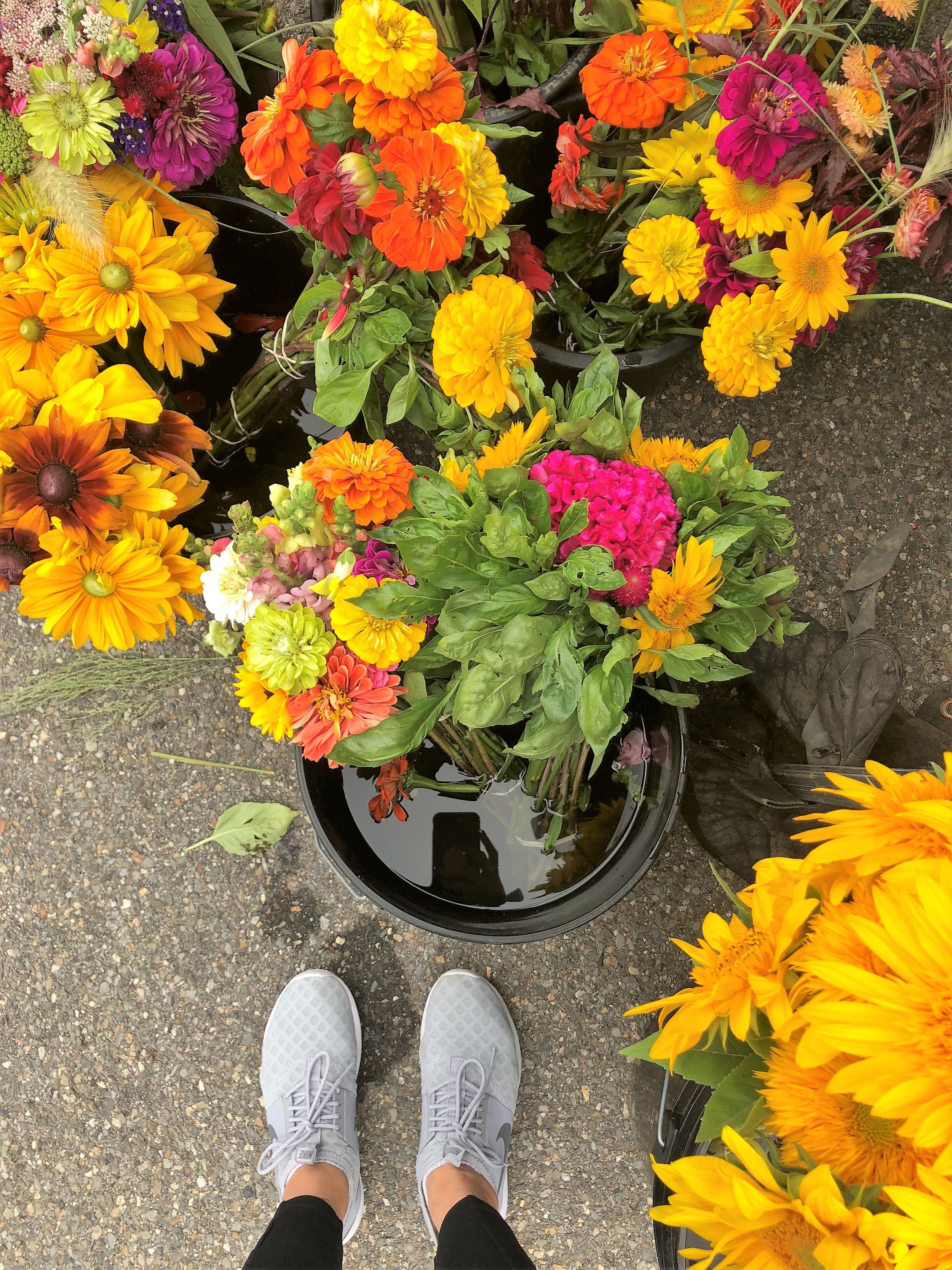 My favorite part of our trip was ending it at the  Portsmouth Farmers' Market . We stocked up on flowers to bring home and cider donuts for the car ride. There were a few stalls that offered breakfast foods. We almost wished that we had waited to grab our AM bites here!
