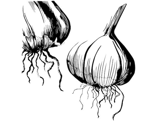 Garlics-01.jpg