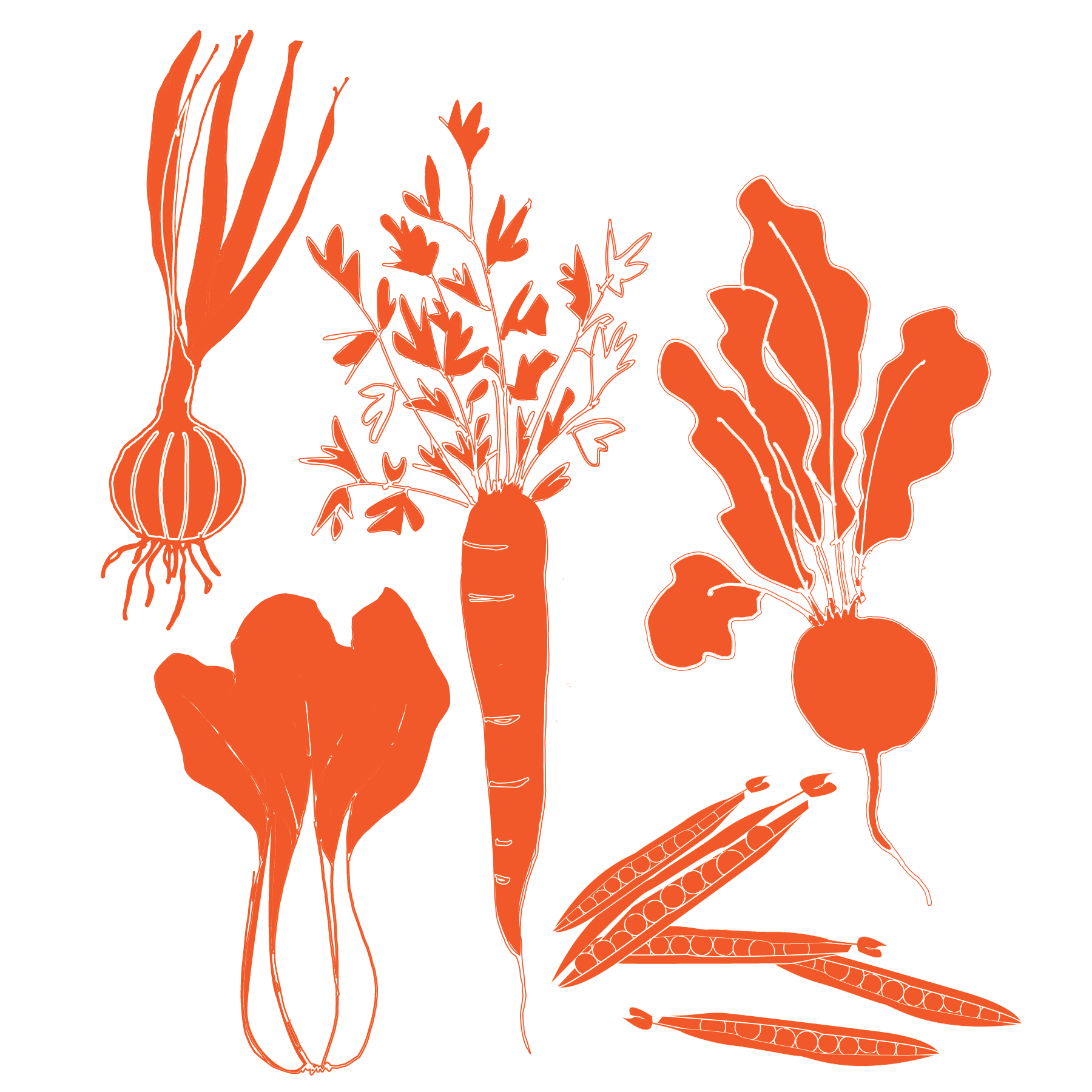 Vegetable Graphics-07.png