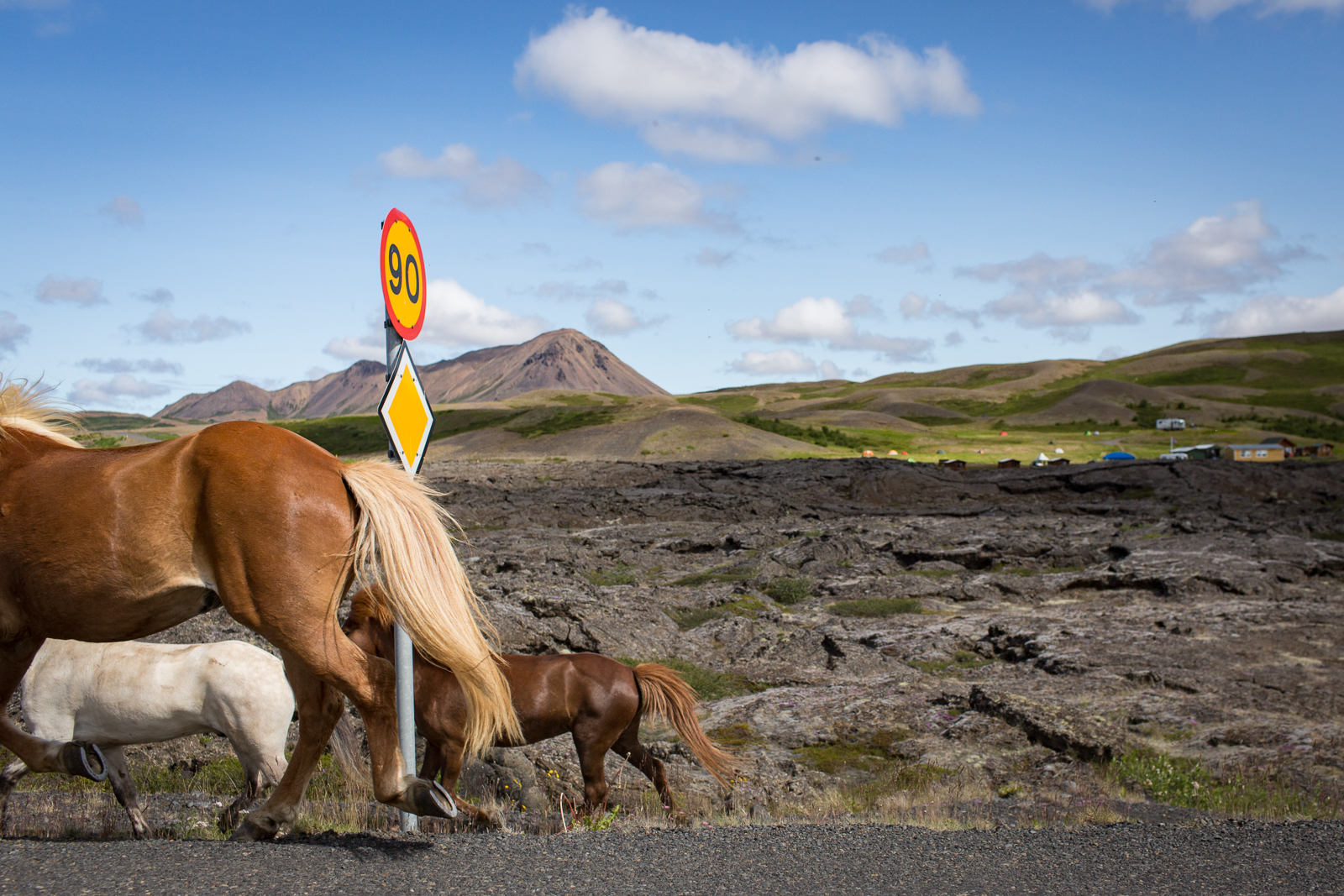 Horses run along the road in Myvatn, in northern Iceland.